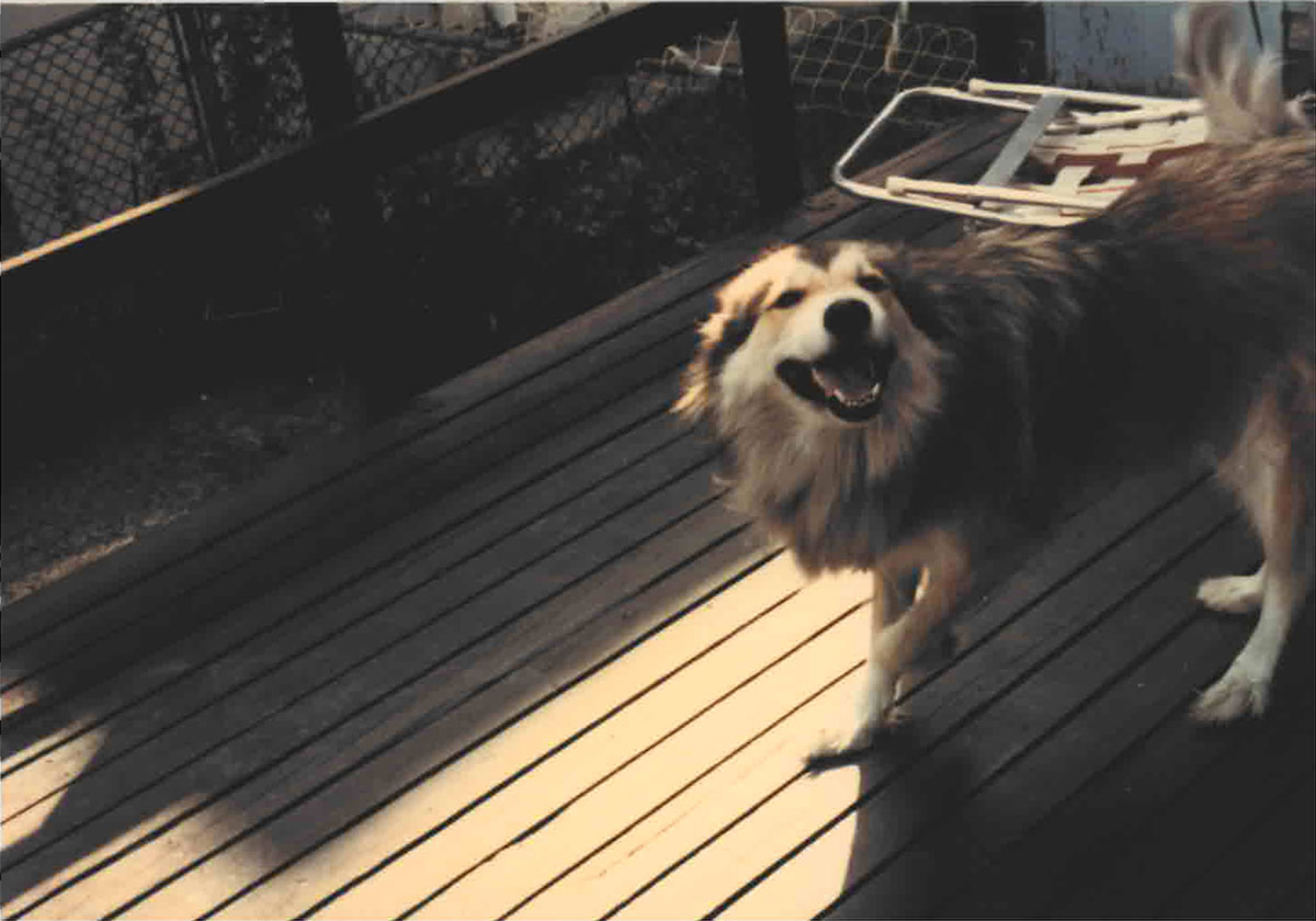 Brutus on the porch in the early 1980s. (Courtesy of Tony Sarabia)