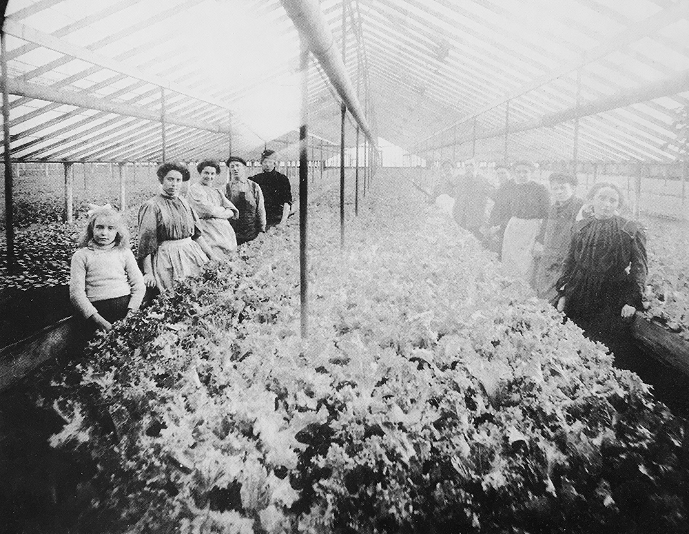 The Breiter family poses near a row of lettuce in their greenhouse. (Courtesy Cathy Jean Maloney, Chicago Gardens: The Early History)