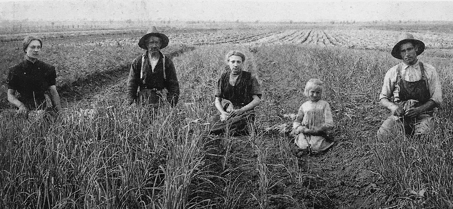 The Klaas Solle family tends an onion field in Summit, Illinois. (Courtesy Charlotte Solle Siegers and Donna Siegers Tuls. Photo from Robert Swierenga's 'Dutch Chicago,' 2002.)
