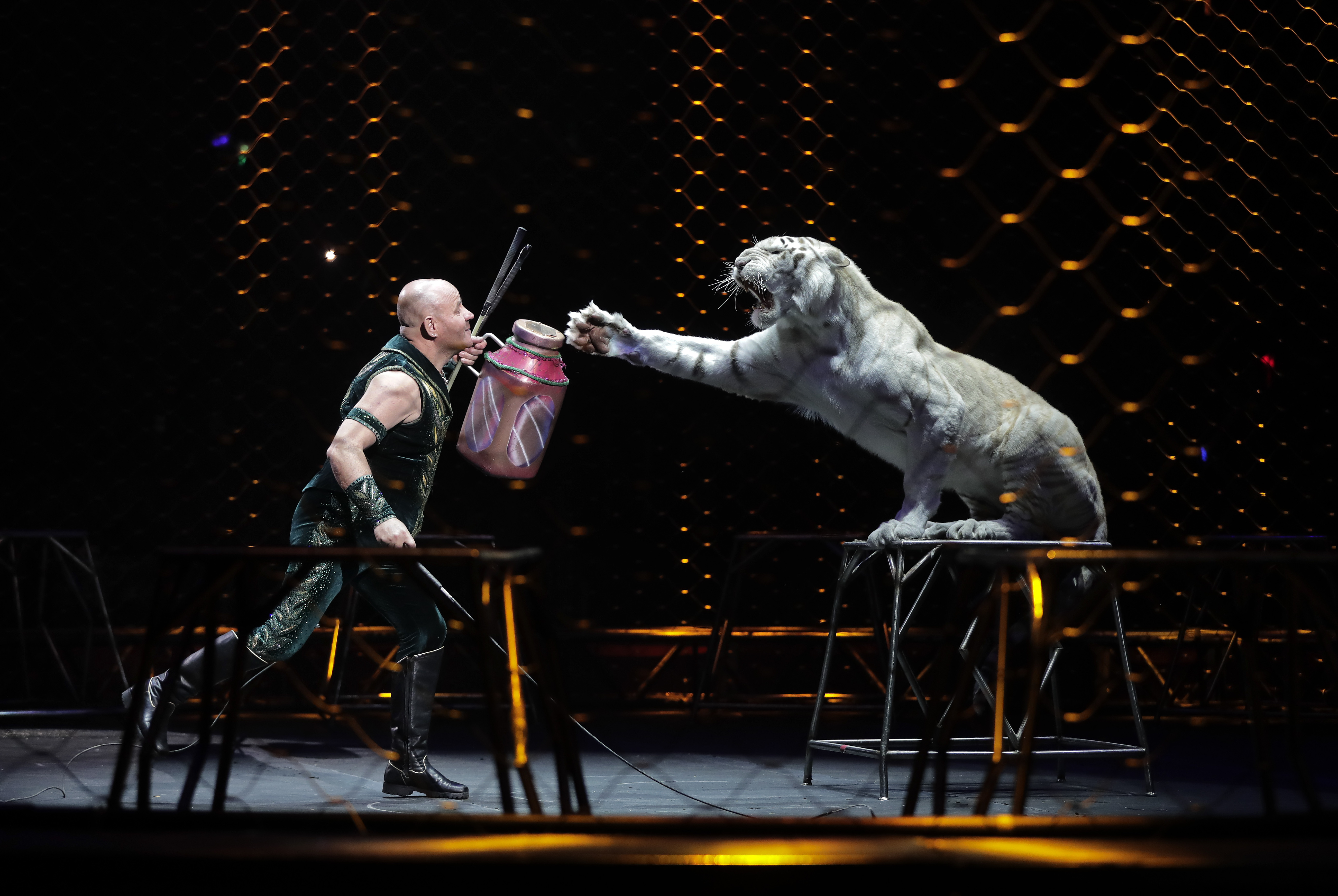 Ringling Bros. tiger trainer Taba Maluenda performs with a white tiger during a show on May 4, 2017, in Providence, R.I. (Julie Jacobson/Associated Press)