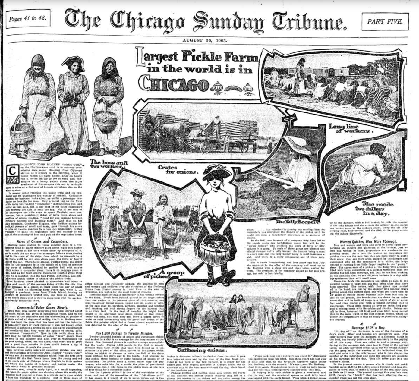 An August 1903 edition of the Chicago Tribune featured the Budlong pickle farm in the Lincoln Square neighborhood.