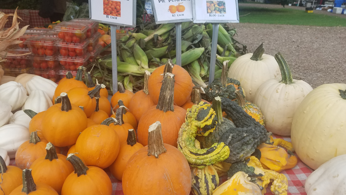 Smits farms displays some colorful pumpkins and gourds at the Green City Market. (Monica Eng/WBEZ)